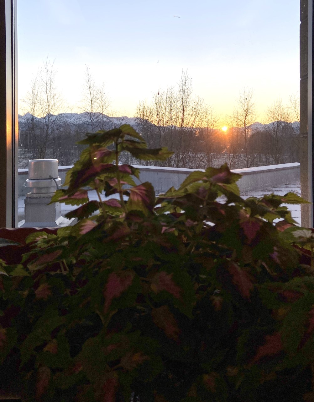 The sun emerges on a frosty morning one day before the Winter Solstice. Photo taken by Jennifer Childress from her Dimond classroom.